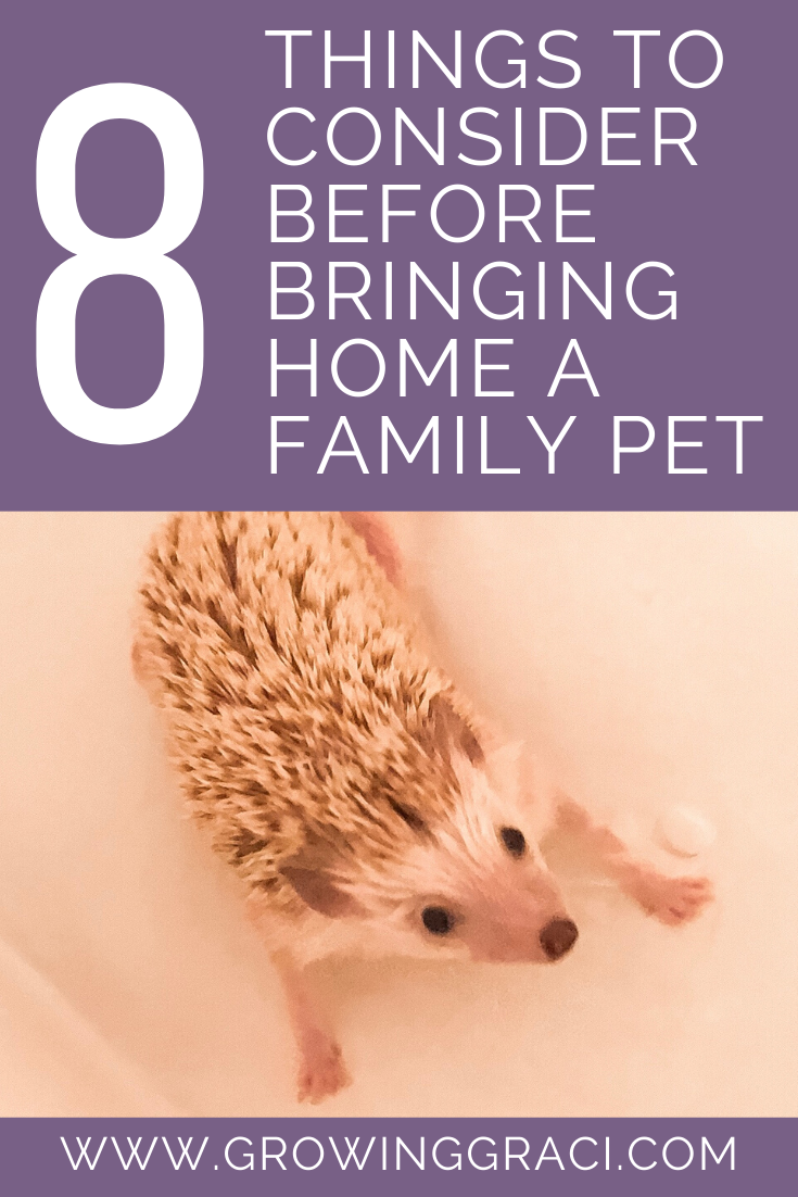 Things To Consider Before Bringing Home A Family Pet