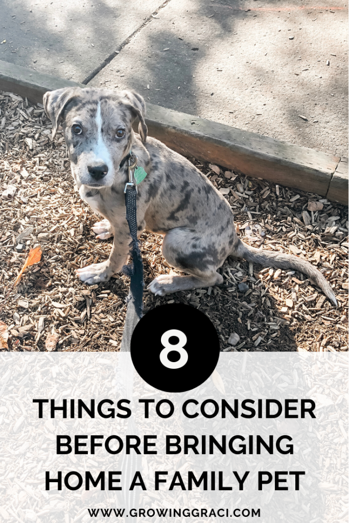 Are you considering a new family pet? Check out this list of things to consider before bringing home a family pet to be sure!